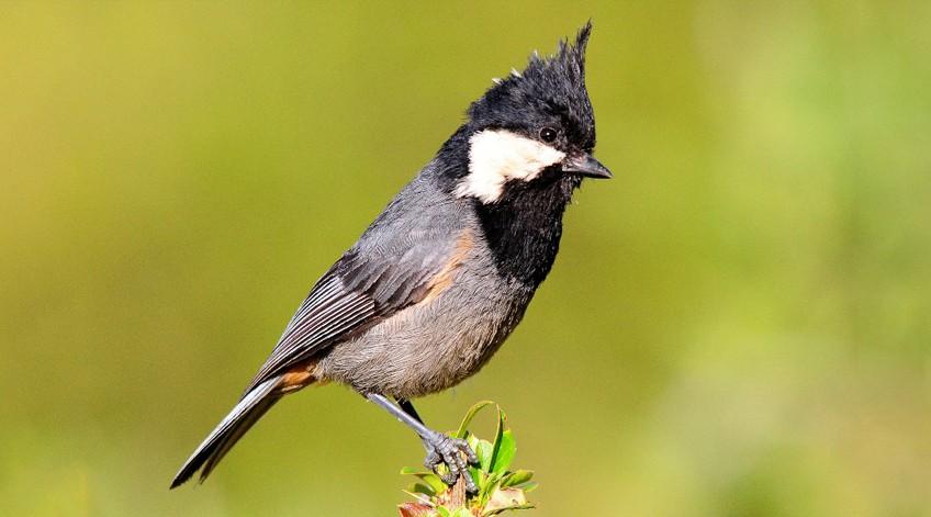 Bird watching tour around Uzbekistan — photo 4